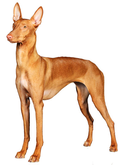 Dog Breeds With Good Recall